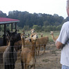 09-14-13_HairloomAlpacas_001