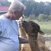 09-14-13_HairloomAlpacas_021